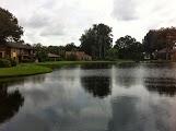 my backyard lake